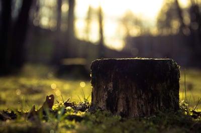 tree stump in yard