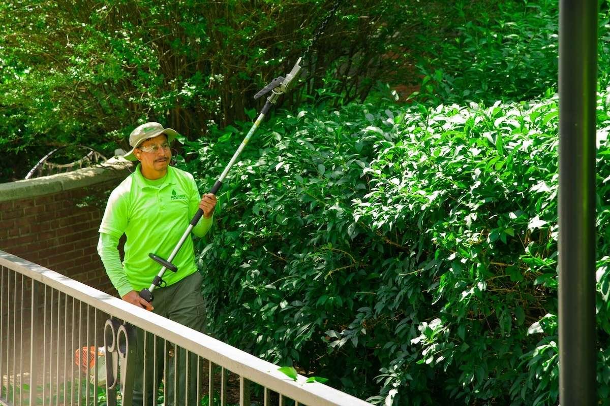 Landscaper removing invasive plants