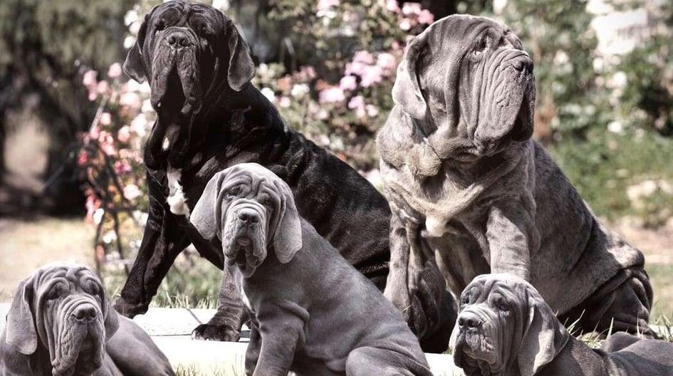 Brad's dogs