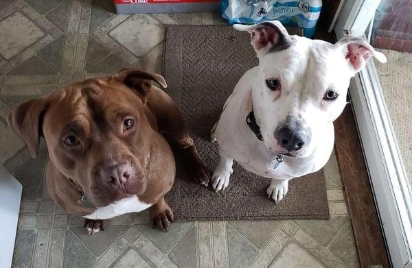 Layla & Tank - Don Gates