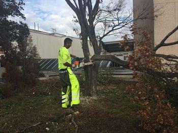 William Urquilla William Urquilla working at Level Green Landscaping