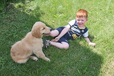 Dog and child in lawn