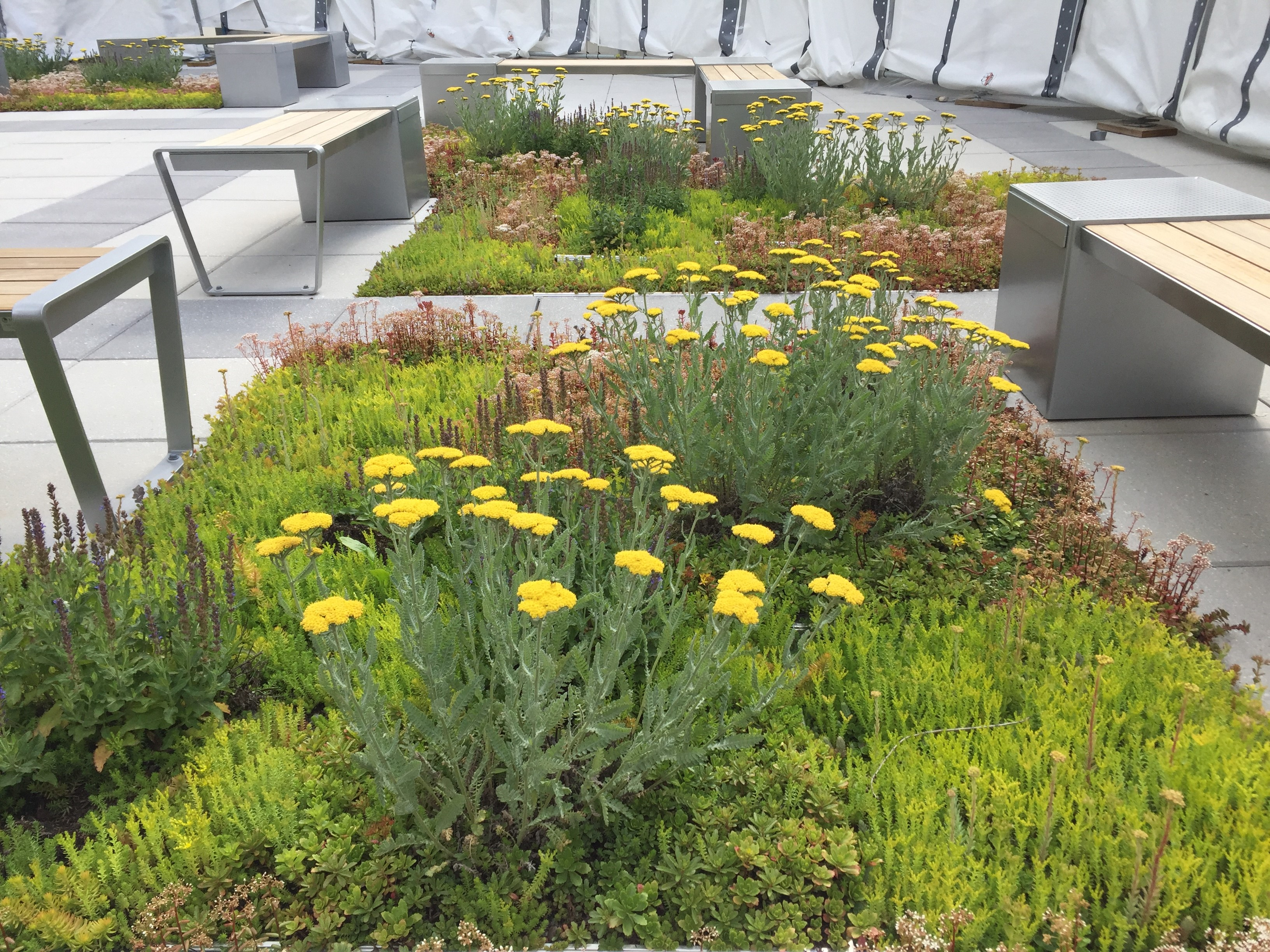 How To Install A Green Roof A Guide For Property Managers