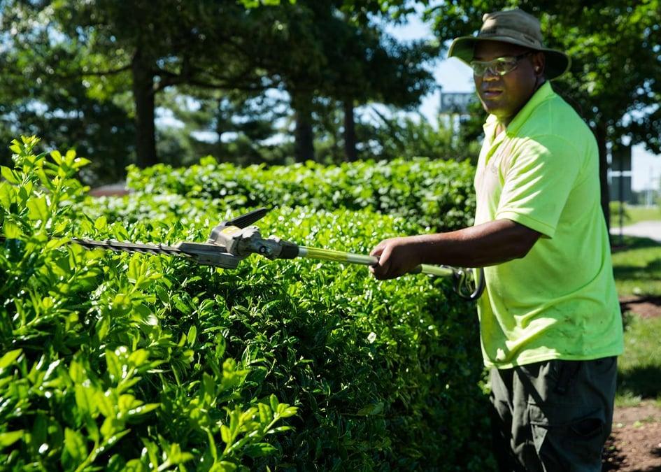 Trimming shrubs for landscape security