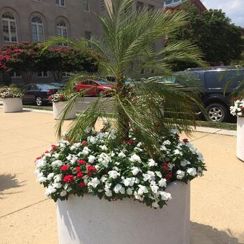 Palm planter that was shipped