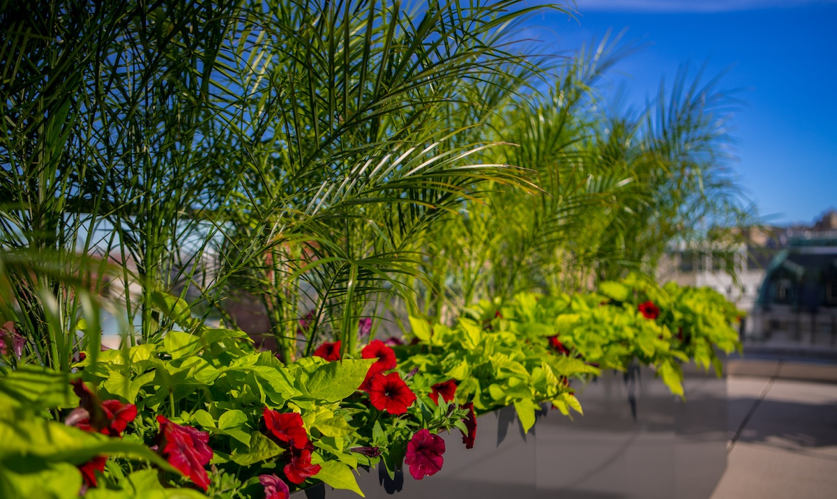 commercial landscaping seasonal container plantings