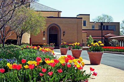 Franciscan Monestary Tulips