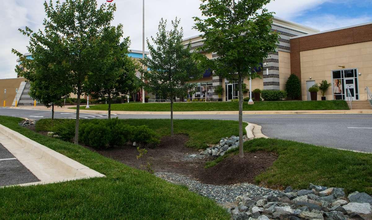 rain garden and drainage