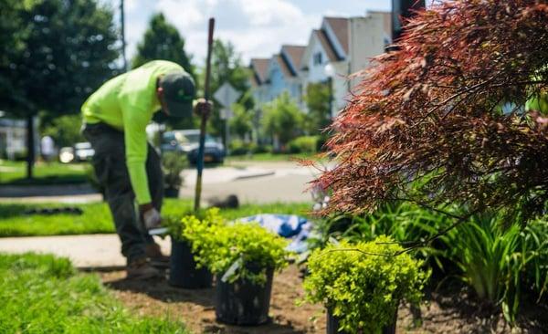 commercial landscaper planting