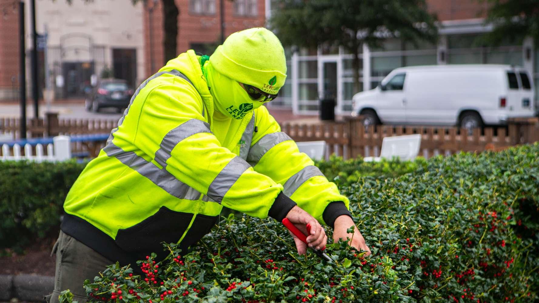 Level Green crew pruning a shrub