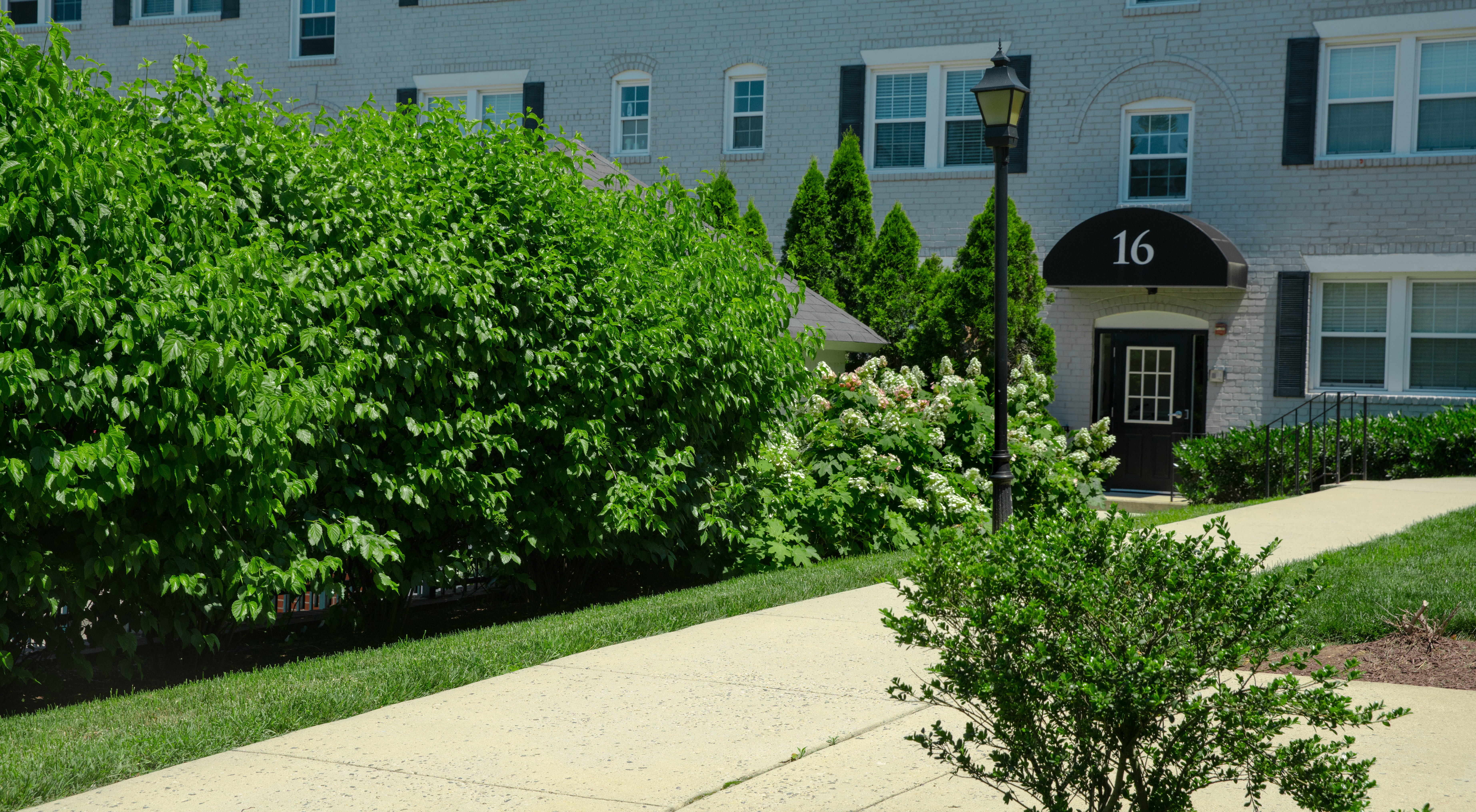 well-maintained shrubs on commercial property