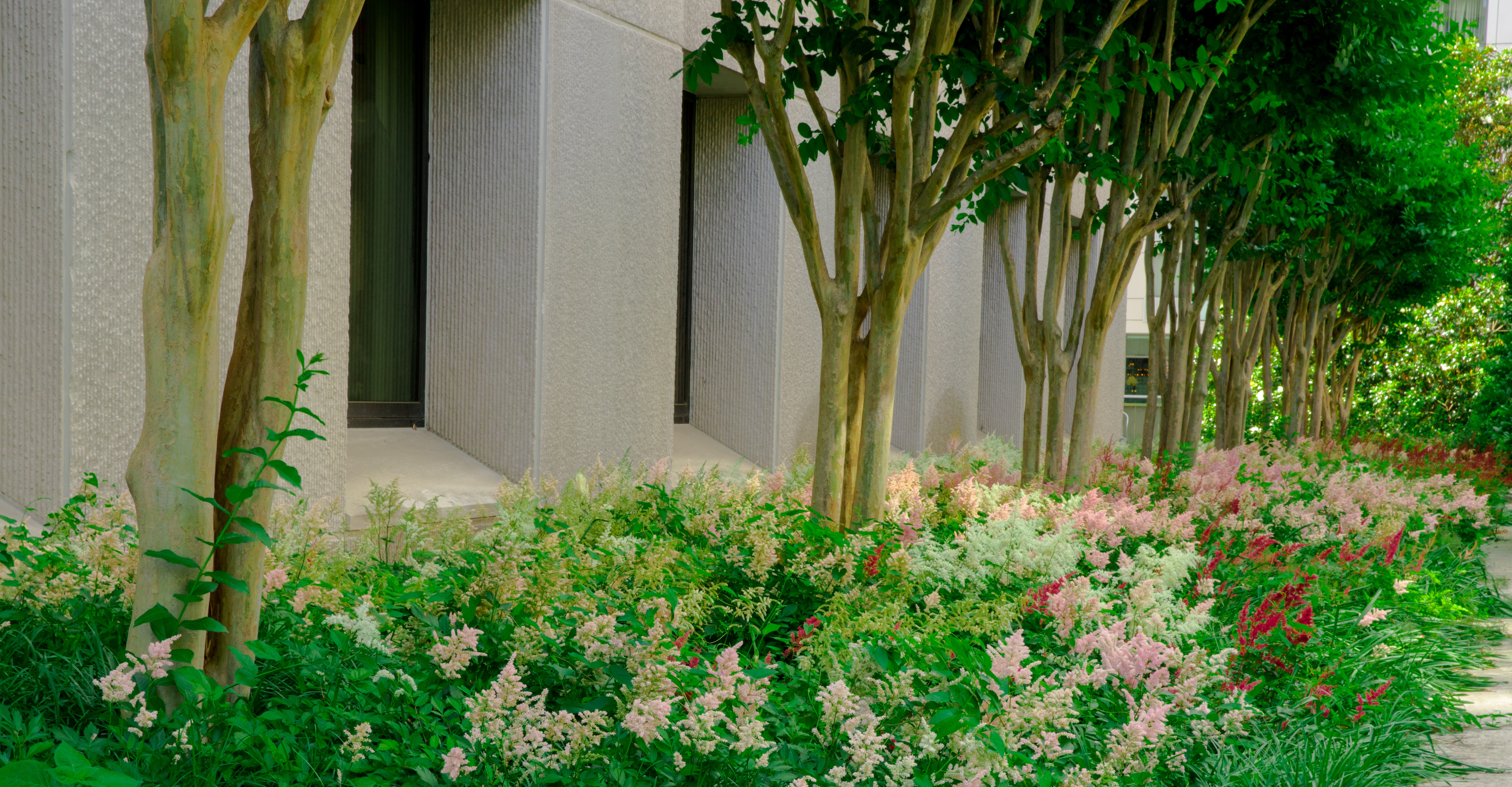 Shrubs maintained by Level Green Landscaping