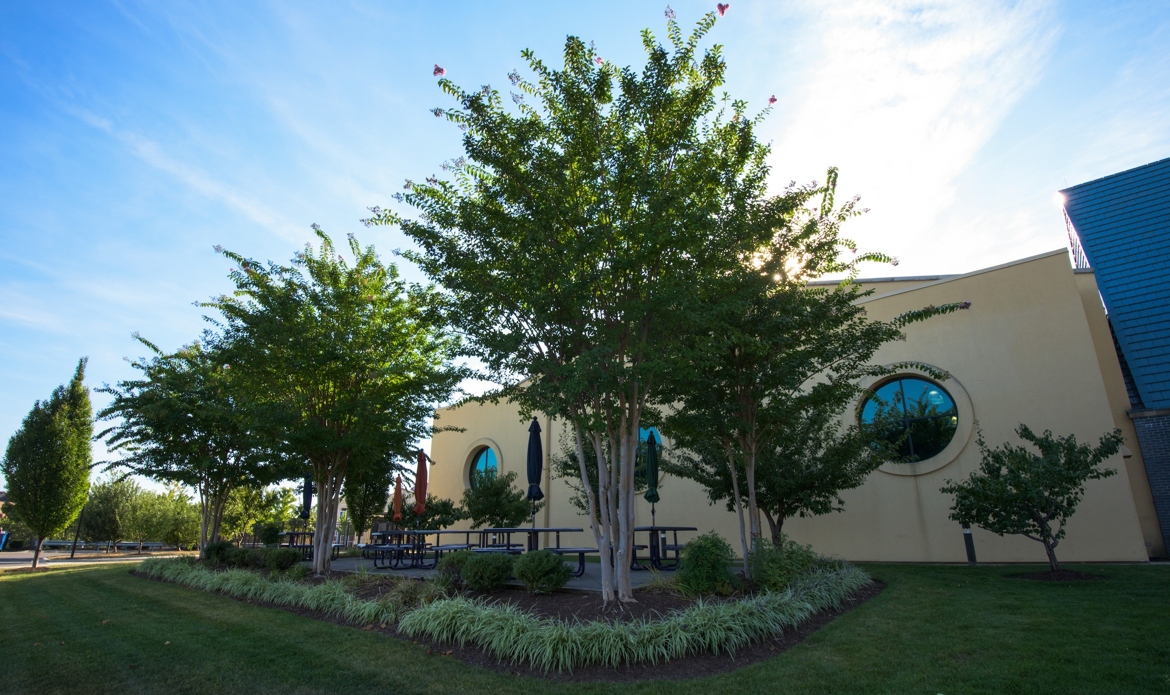 commercial landscape maintained by landscaper in Washington DC