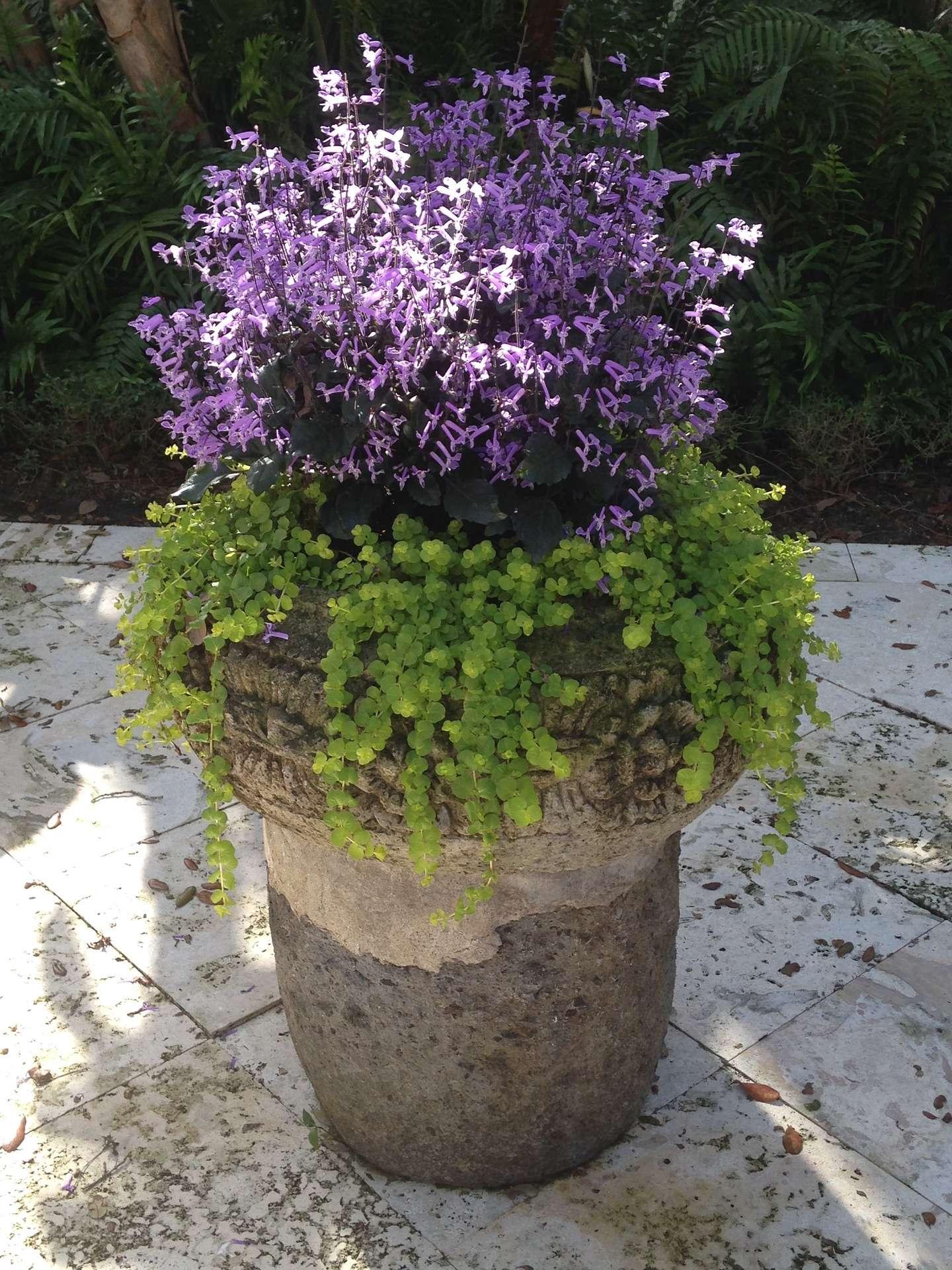 container-garden-1199822_1920.jpg