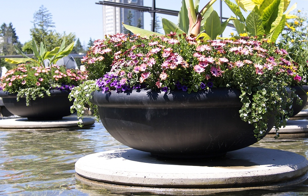 Add these container plants for fall color to your Washington DC commercial landscape