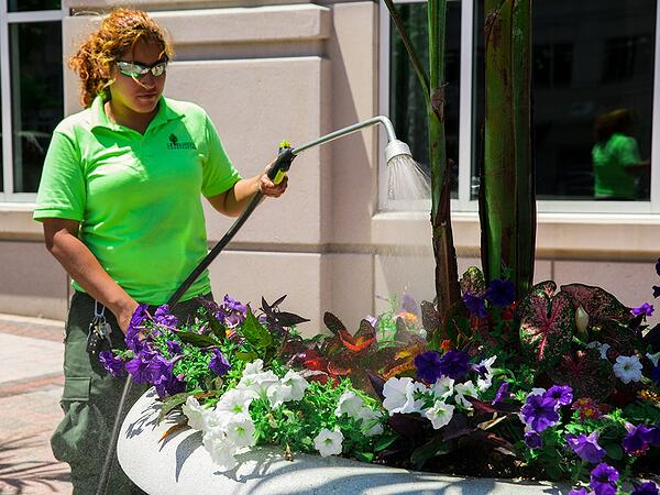 watering large potted plants