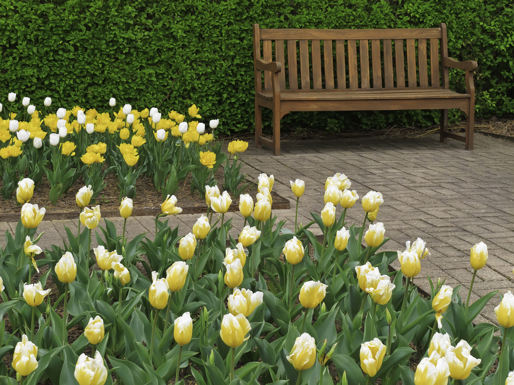 tulips near wooden bench on commercial property