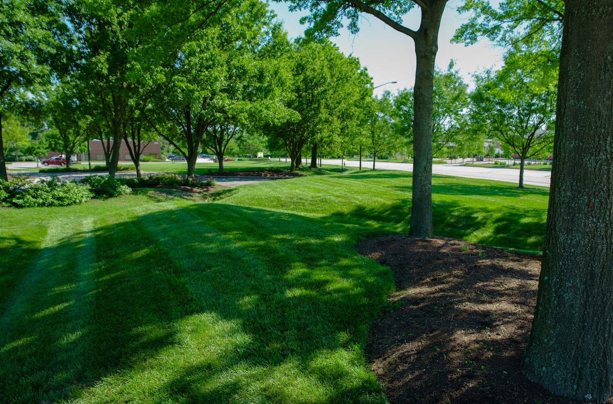 Lawn Aeration vs Slit-Seeding