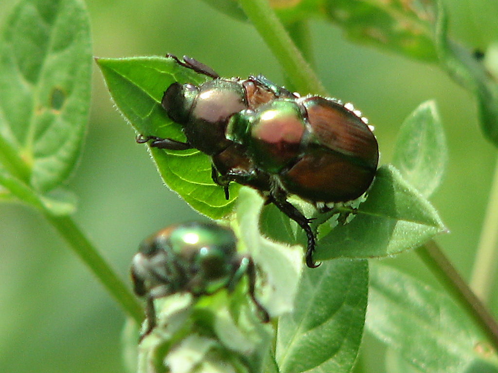 The Most Common Landscape Pests and Plant Diseases (And What To Do About Them)