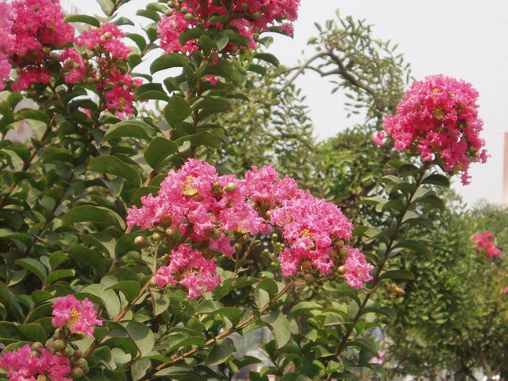 The Best Flowering Trees for Washington DC, Virginia & Maryland