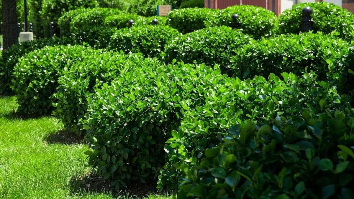 How We UsePlant Growth RegulatorsTo Save Resources and Improve Plant Health