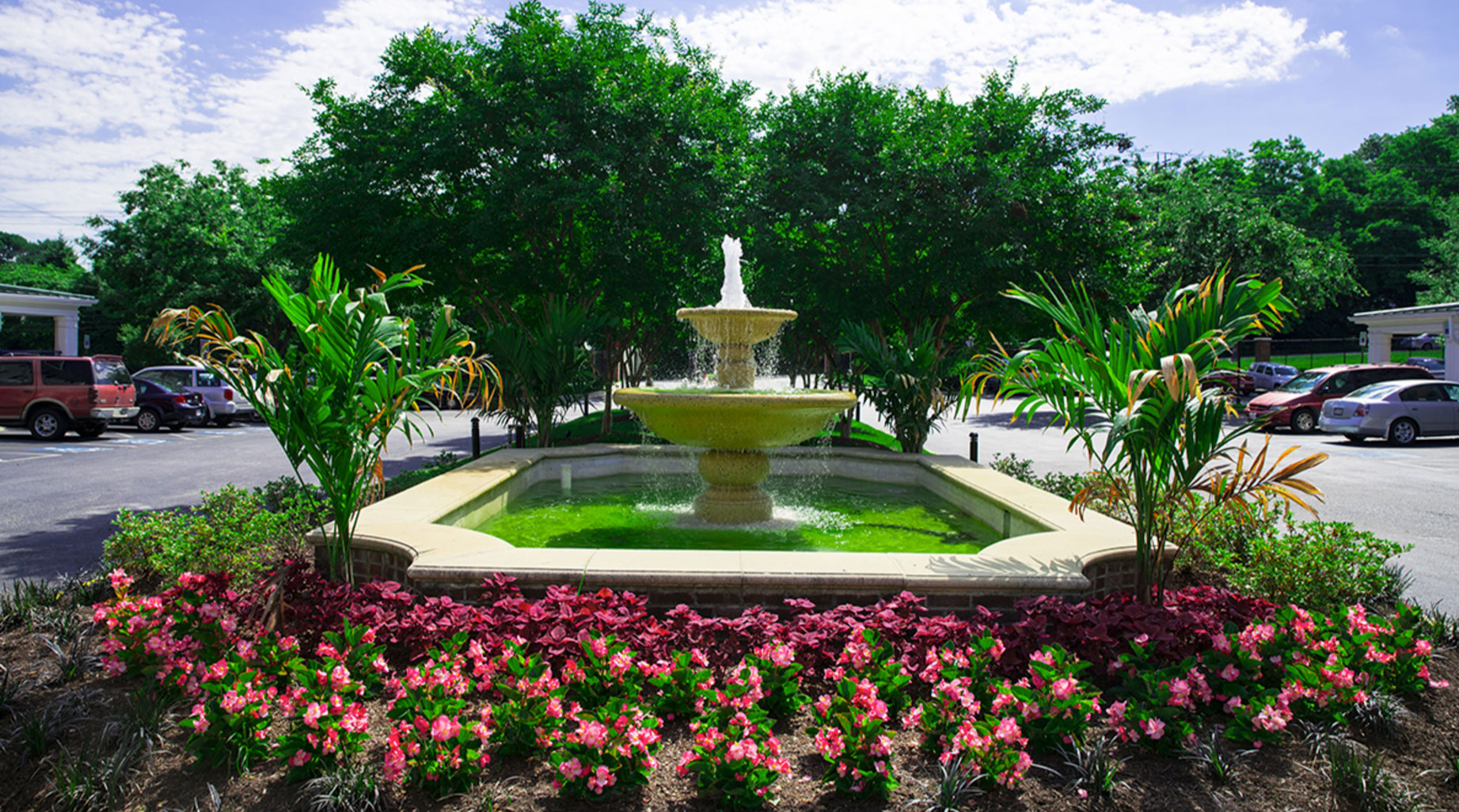 A Dozen Of The Best Native Plants For Your Washington DC Commercial Property