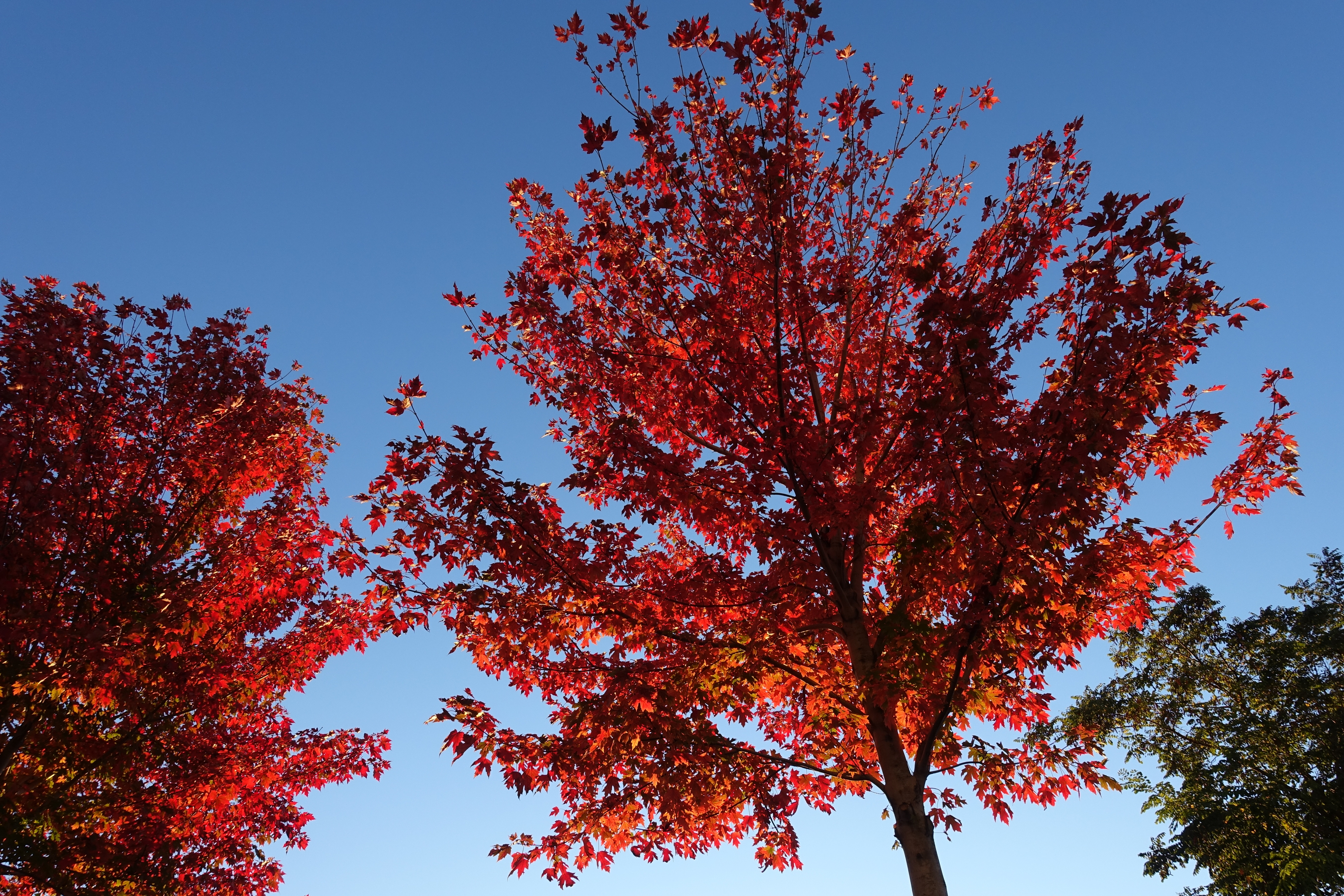 The Best Trees For Parking Lots And Paved Areas