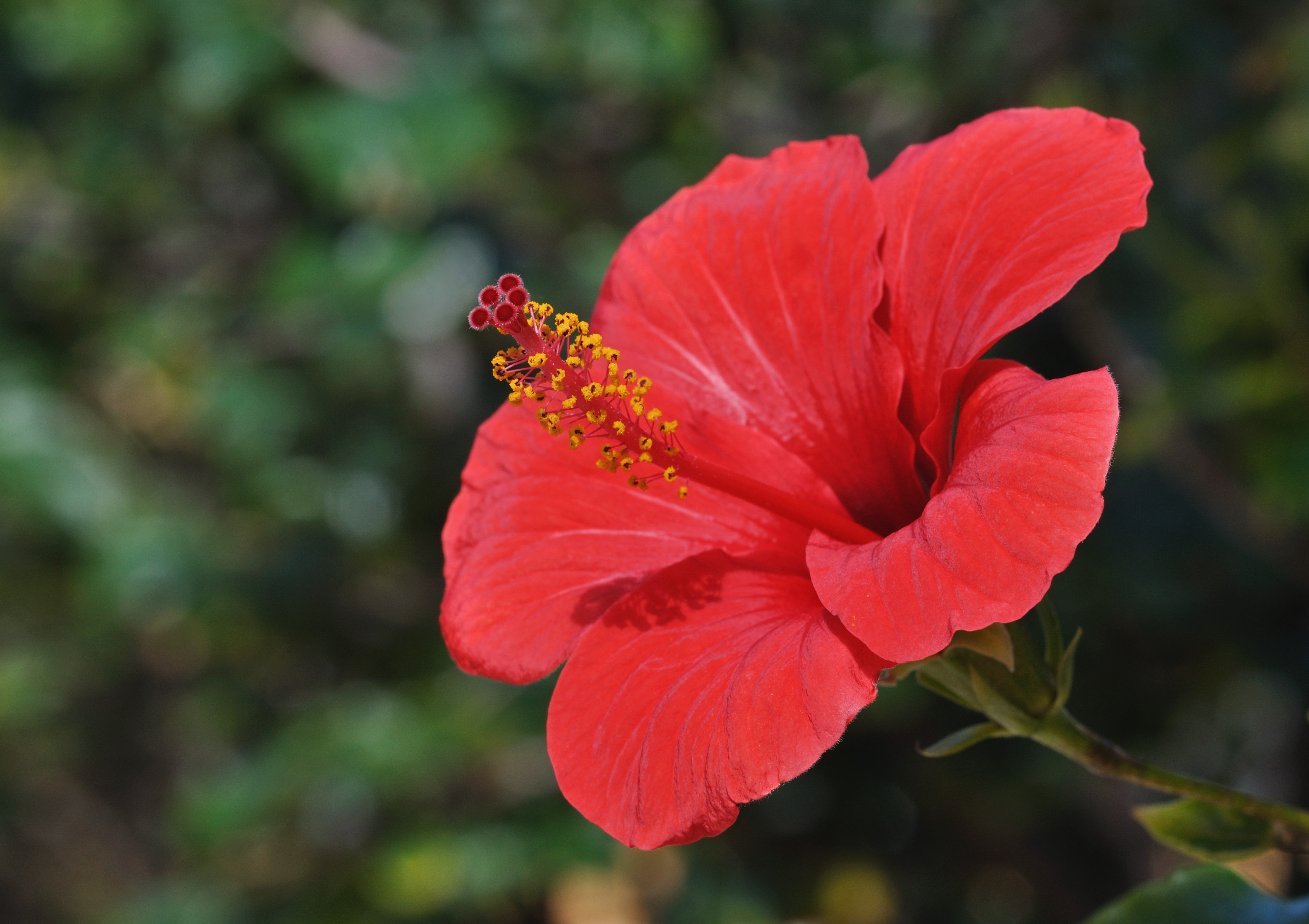 Best Tropical Plants For Washington DC, Maryland and Virginia
