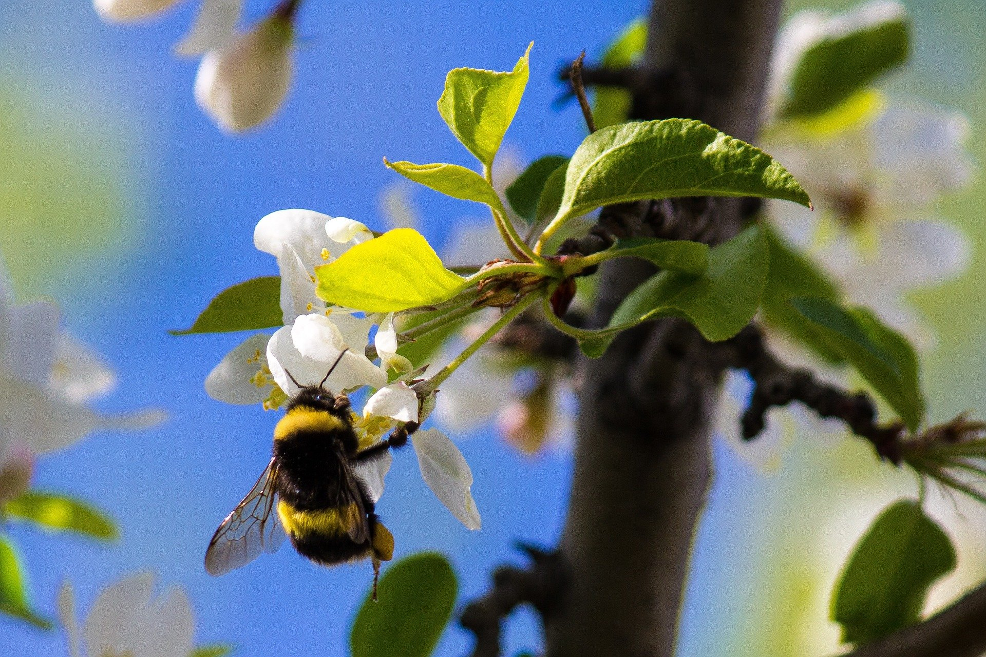 15 Best Plants To Attract Pollinators (And Other Beneficial Insects) To Your Commercial Property