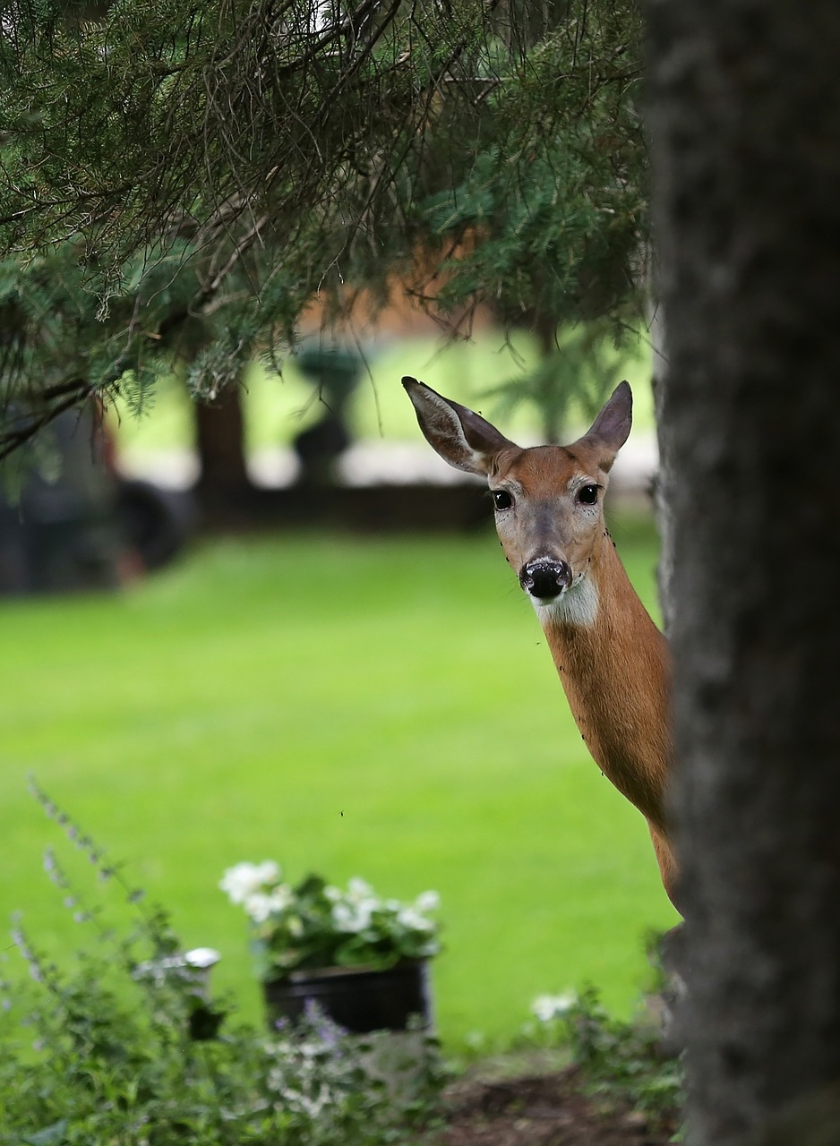 How to Prevent Deer From Damaging Your Commercial Landscape