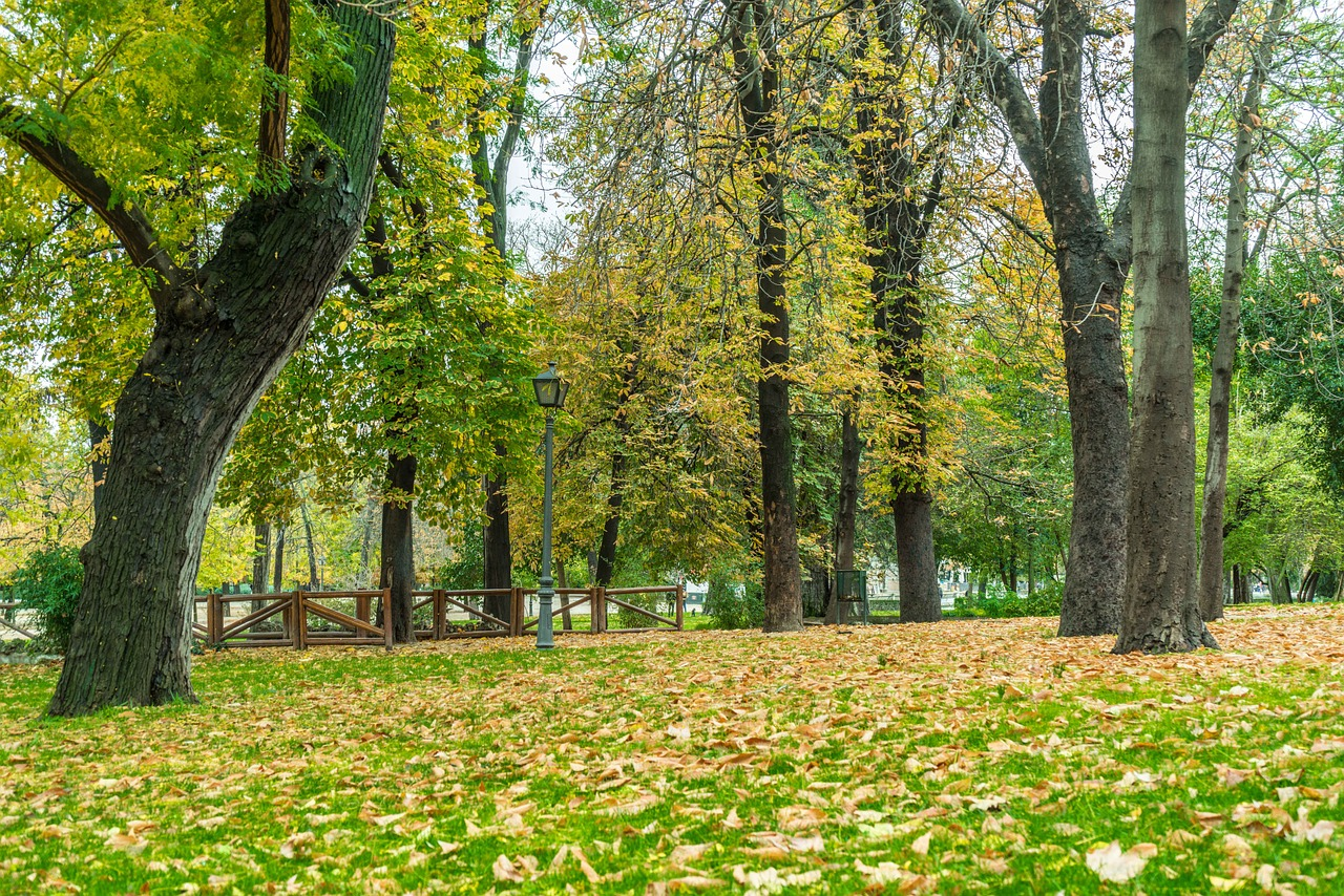 Removing Leaves Vs Mulching Leaves Which Is Best For