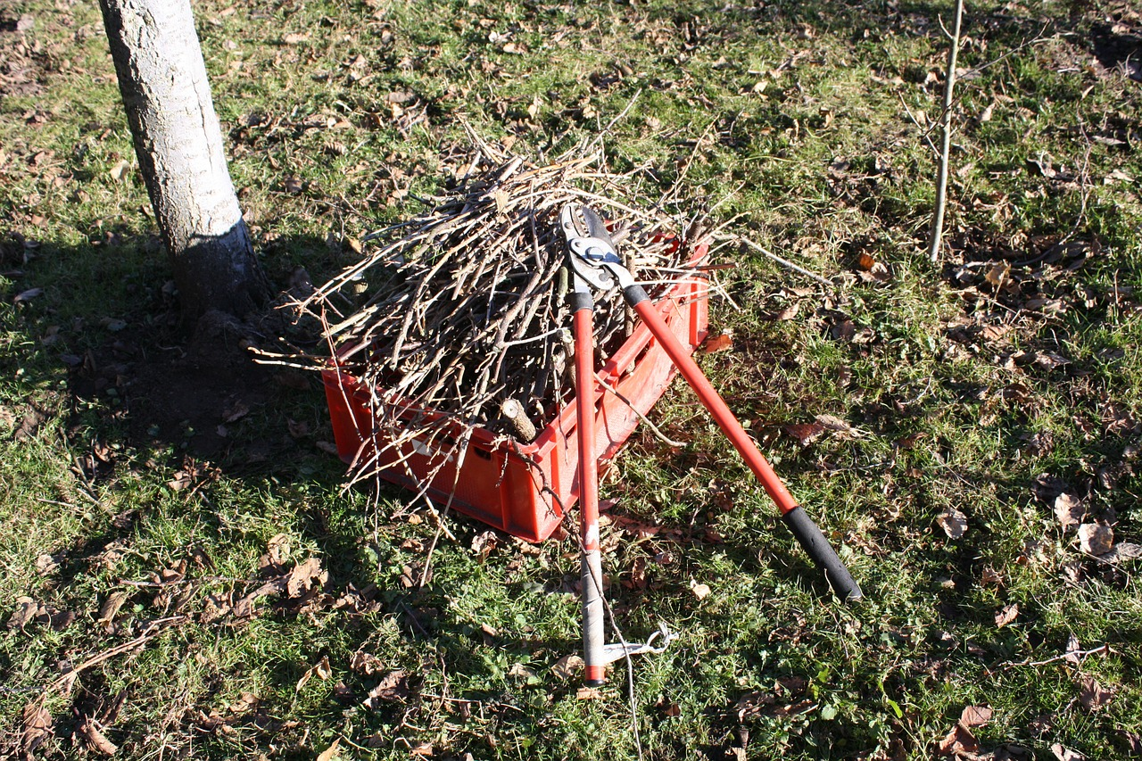 8 Essential Facts Property Managers Need to Know About Dormant Pruning