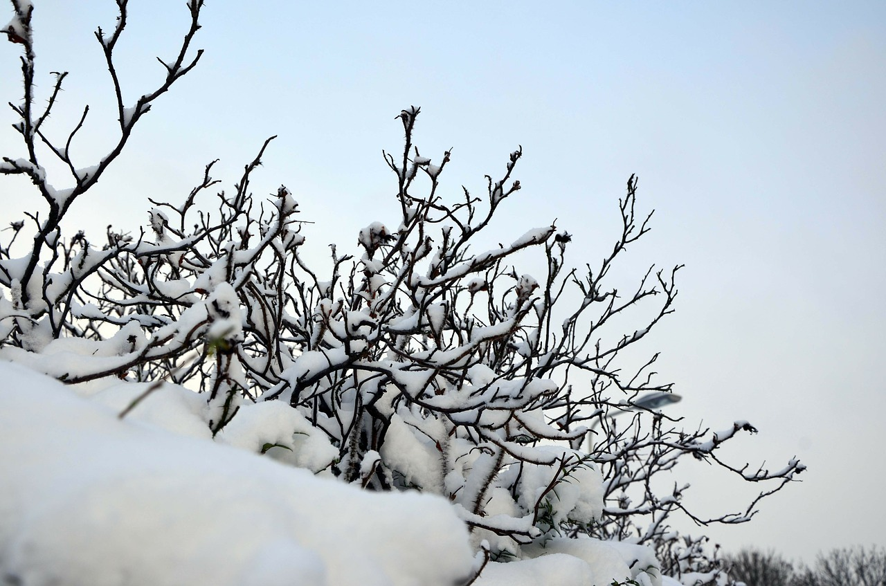 The 8 Keys To Maintaining Plants During the Winter Season
