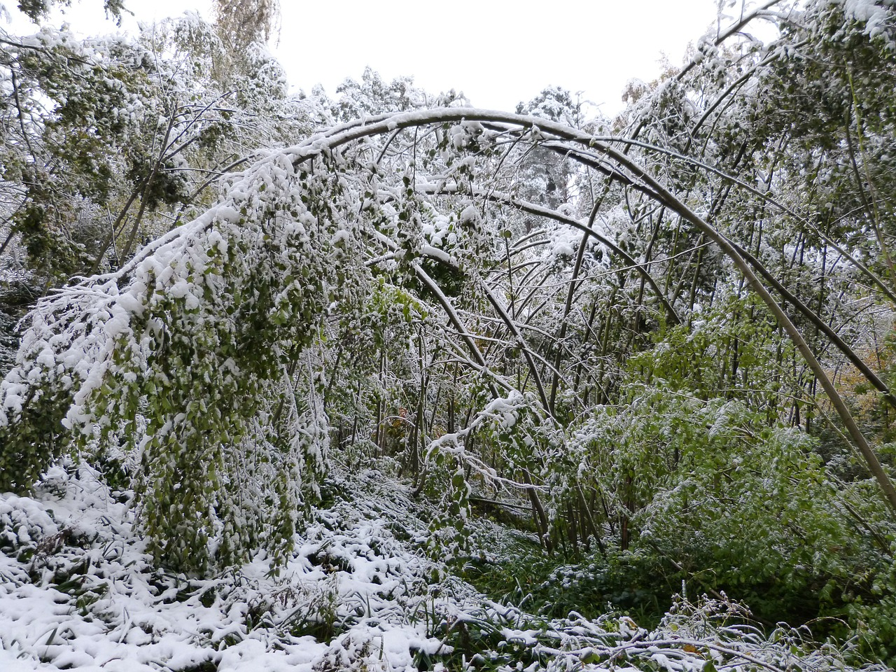 Assessing Winter Damage To Trees, Shrubs And Grasses