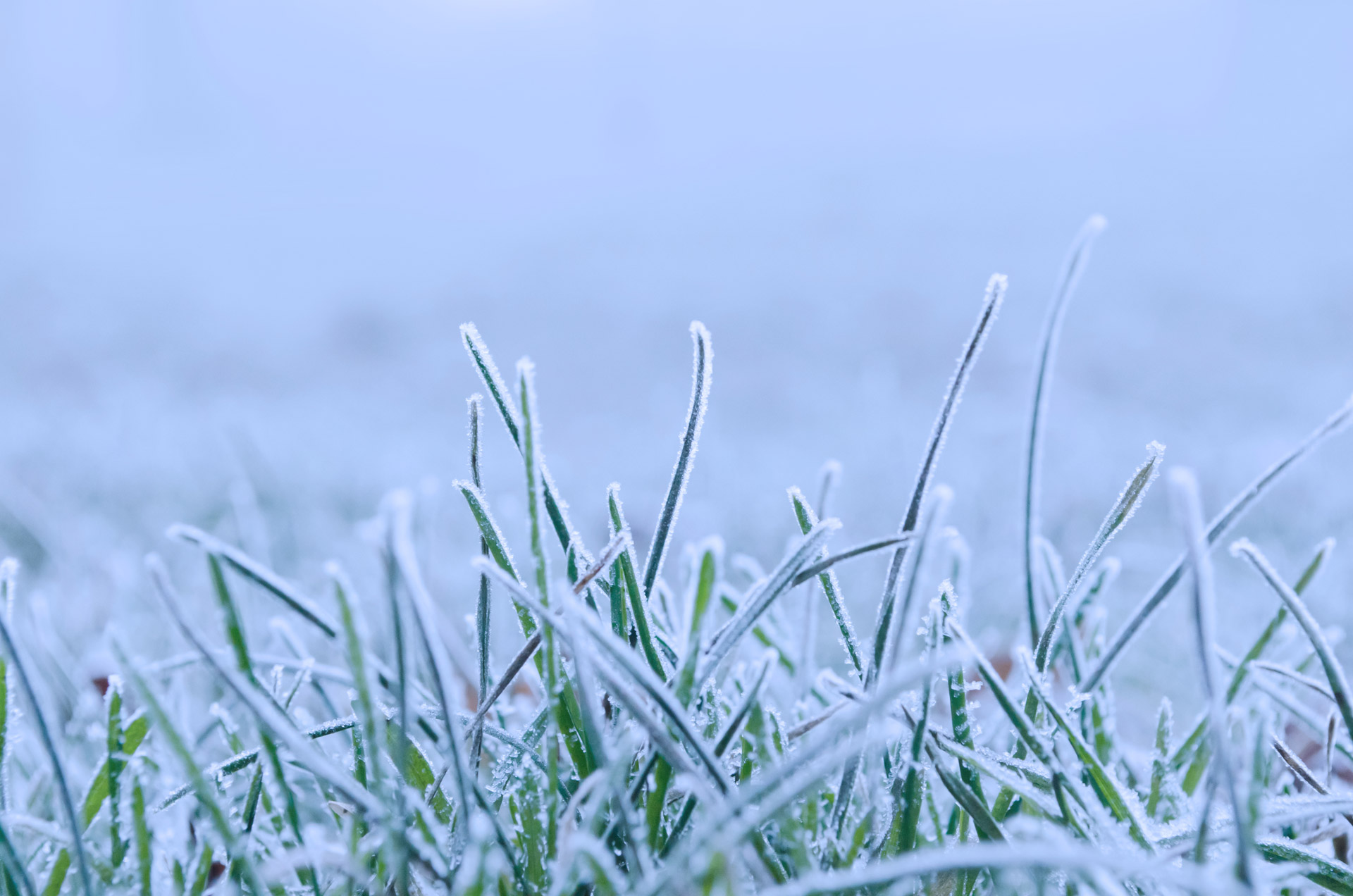 YourPre-Winter Irrigation Checklist(and, Trends and Upgrades to Consider for 2017)